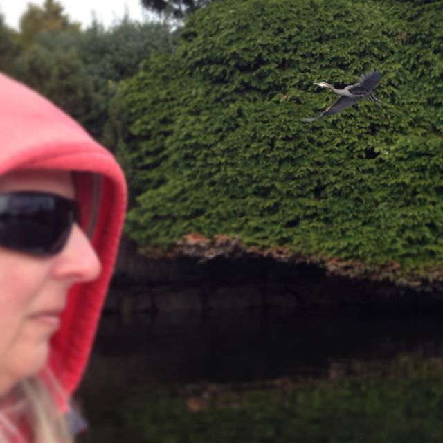 """I call this one """"Leslie and the Heron"""" Exploring the Gorge by dinghy. #Victoria"""