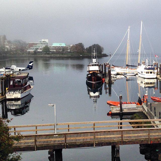 Foggy sunny morn. #Victoria
