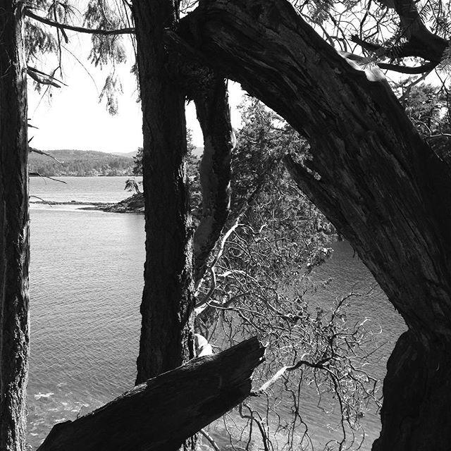 Wallace Island.
