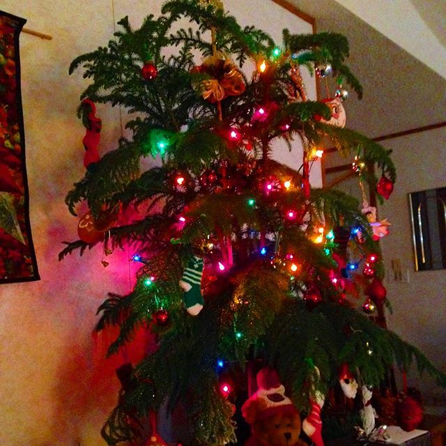 The Xmas Norfolk pine at my parents. Merry merry to one and all!