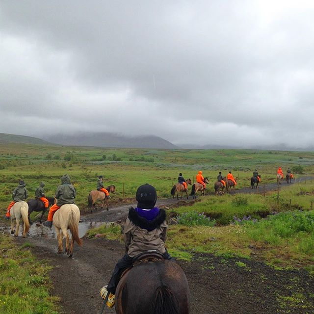 A fantastic way to see Iceland. And they have a unique 8-step gait that really covers ground.