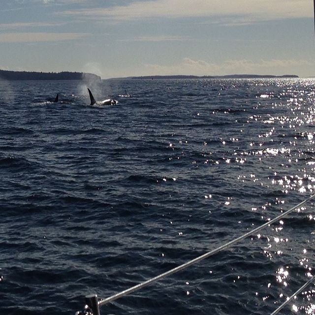 #orca surprise us just outside of Captains Passage!