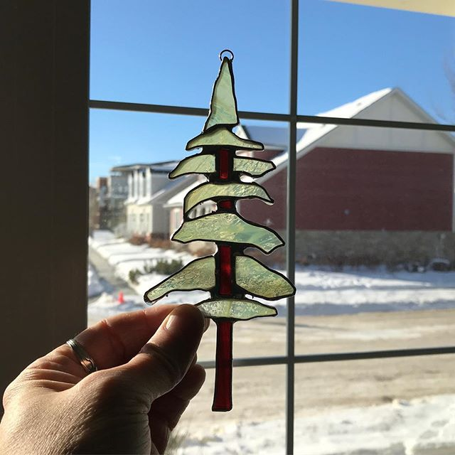 Day 24: Pseudotsuga menziesii. My favorite Latin name. I love the way it sounds... pseudo tsuga!? #douglasfir #stainedglass #evergreen #BCtrees #suncatcher #challengemyself #fourdaystogo
